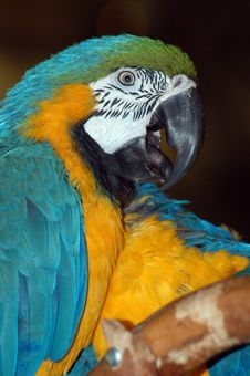 Free Colorful Macaw Parrots Royalty Free Stock Photo - 1232435