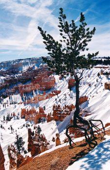 Free Lone Tree, Bryce Canyon, Utah Stock Photography - 1234232
