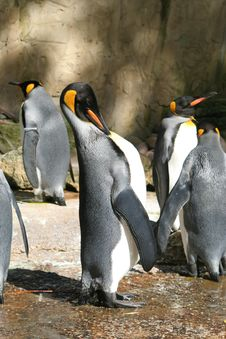 Free Penguin Royalty Free Stock Photography - 1234307