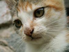 Free Cat Stock Photo - 1235530