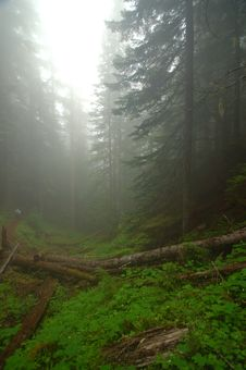 Free Pacific Northwest Rainforest Stock Photo - 1235830