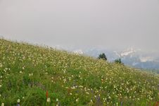 Free Flowery Mountain Meadow Stock Images - 1235894
