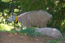 Free Mountain Goats Stock Photos - 1235953