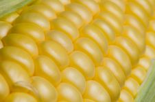 Free Corn On The Cob Royalty Free Stock Images - 1237169