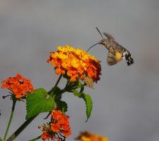 Free Moth Royalty Free Stock Photo - 1238295