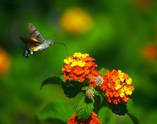 Free Moth Stock Image - 1238301