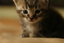 Free Cute Little Kitten Stock Photo - 1238840