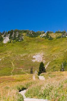 Free Hiking Trail In Mt. Rainier National Park Royalty Free Stock Images - 1239539