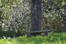 Free Tree, Grass, Grove, Leaf Royalty Free Stock Photography - 123126047