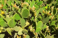 Free Plant, Vegetation, Cactus, Flowering Plant Royalty Free Stock Photography - 123126127