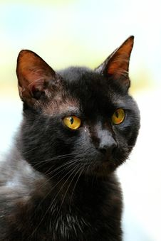 Free Cat, Whiskers, Black Cat, Mammal Royalty Free Stock Photo - 123126315