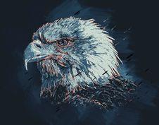 Free Beak, Bird Of Prey, Bird, Eagle Royalty Free Stock Images - 123126369