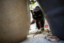 Free Cat, Small To Medium Sized Cats, Cat Like Mammal, Black Cat Stock Photos - 123126603