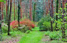 Free Vegetation, Ecosystem, Woodland, Nature Royalty Free Stock Image - 123126696