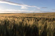 Free Ecosystem, Field, Crop, Grass Family Stock Photo - 123127360