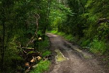 Free Path, Vegetation, Nature, Forest Royalty Free Stock Photography - 123127427