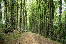 Free Woodland, Ecosystem, Tree, Forest Royalty Free Stock Photos - 123127618