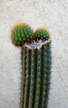 Free Plant, Cactus, Flowering Plant, Thorns Spines And Prickles Stock Photo - 123205200