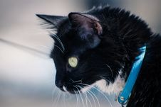 Free Cat, Black Cat, Whiskers, Mammal Stock Photography - 123205482