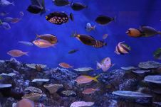 Free Coral Reef, Coral Reef Fish, Ecosystem, Marine Biology Royalty Free Stock Photography - 123239427