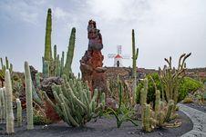 Free Plant, Vegetation, Hedgehog Cactus, Cactus Royalty Free Stock Photography - 123239847