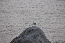 Free Sea, Water, Bird, Seabird Royalty Free Stock Photography - 123240257