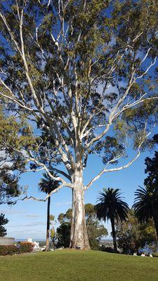 Free Tree, Woody Plant, Plant, Grove Stock Image - 123314571