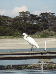 Free Bird, Fauna, Beak, Shore Royalty Free Stock Image - 123314656