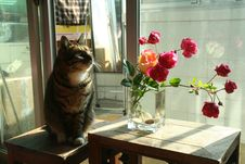 Free Flower, Cat, Mammal, Small To Medium Sized Cats Royalty Free Stock Image - 123399936
