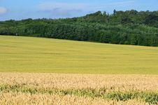 Free Field, Grassland, Crop, Grass Family Stock Image - 123400071