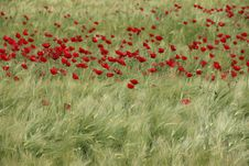 Free Ecosystem, Field, Flower, Grass Stock Photography - 123400072