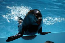Free Dolphin, Marine Mammal, Mammal, Whales Dolphins And Porpoises Stock Photography - 123400422