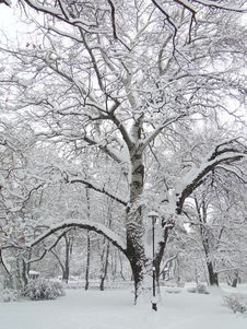 Free Snow, Winter, Tree, Branch Stock Images - 123400424