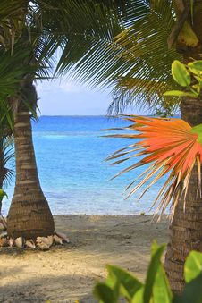 Free Tropics, Arecales, Caribbean, Palm Tree Royalty Free Stock Images - 123469769