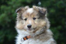 Free Dog, Dog Like Mammal, Dog Breed, Mammal Royalty Free Stock Photography - 123470287