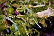 Free Leaf, Leaf Vegetable, Vegetable, Spring Greens Royalty Free Stock Photography - 123470297