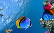 Free Ecosystem, Coral Reef Fish, Fish, Coral Reef Royalty Free Stock Photography - 123470407