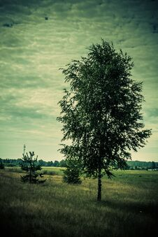 Free Tree In The Meadow Royalty Free Stock Photos - 123653078