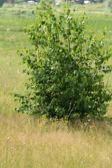 Free Tree In The Meadow Stock Photos - 123653113