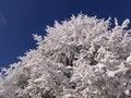 Free Winter In Ciucas Mountains Stock Photo - 1240570