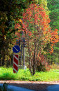 Free Autumn Road Royalty Free Stock Image - 1249076