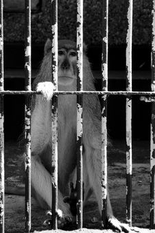 Free Small Prisoner Stock Photography - 1242592