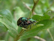 Free Mating Season Stock Photography - 1243152