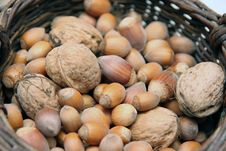 Free Hazel Nuts And Walnuts Royalty Free Stock Photo - 1243765