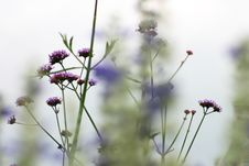 Free Small Violet Flowers Stock Photography - 1244042