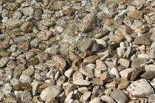 See Stones Stock Photos