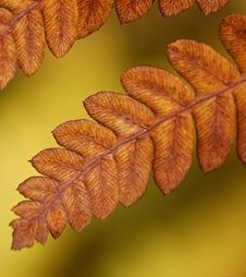 Free Dying Fern Stock Photography - 1246602