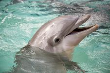 Free Dolphin Royalty Free Stock Images - 1247079