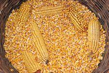 Free Corns Royalty Free Stock Photo - 1247535