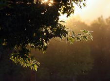 Free Evening Forest Stock Photo - 1248650